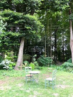大きな木にぶら下がる長いブランコの写真・画像素材[2116371]