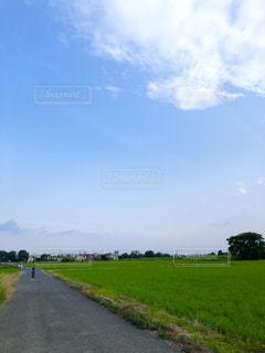 田んぼ道を散歩中の写真・画像素材[2231609]