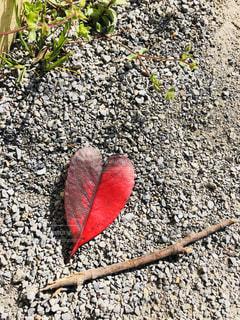 かわいいハートの葉の写真・画像素材[1788951]