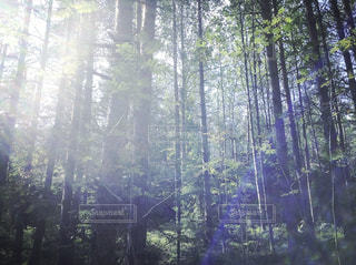 フォレスト内のツリーの写真・画像素材[1776603]