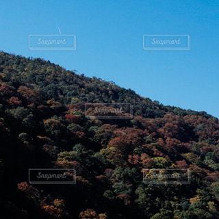 京都嵐山の写真・画像素材[1776653]