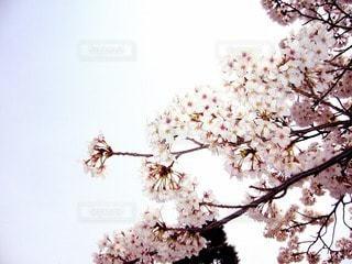 自然の写真・画像素材[63530]