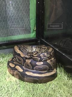 近くに蛇のアップの写真・画像素材[1777382]