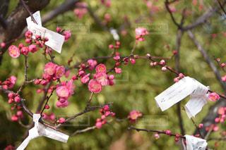 花に願いをの写真・画像素材[1821853]