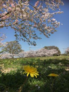 野に咲く花々の写真・画像素材[1827838]