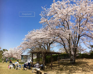 桜の木の下でBBQ♪iPhoneの写真・画像素材[1827882]