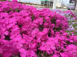 歩道に春色の写真・画像素材[1833794]