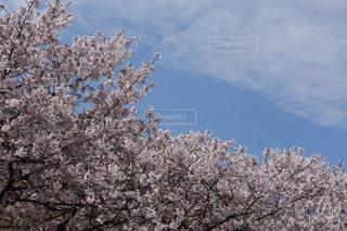 空の写真・画像素材[2014981]