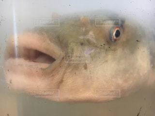 魚の写真・画像素材[2030047]