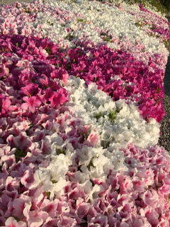 花の写真・画像素材[2030194]