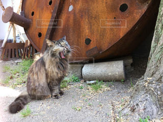 猫の写真・画像素材[2032204]