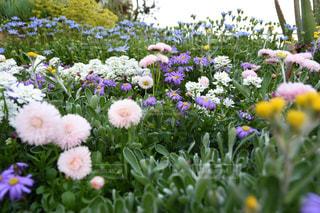 都会の小さなお花畑の写真・画像素材[2096147]
