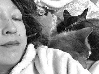 猫にゃんとスヤスヤの写真・画像素材[2951965]