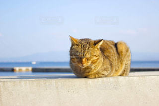 日向ぼっこな猫の写真・画像素材[1785298]