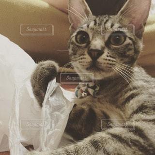 猫の写真・画像素材[61983]