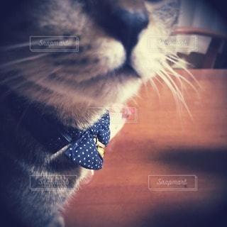 猫の写真・画像素材[79442]