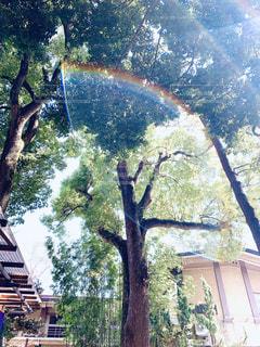 幸せな虹の写真・画像素材[1856171]
