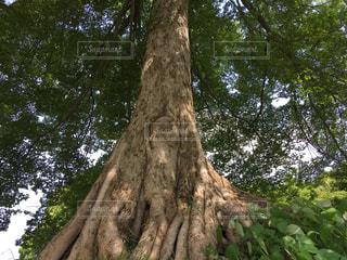 木の隣に立っているキリンの写真・画像素材[722953]