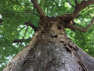 大きな木の枝の写真・画像素材[722954]