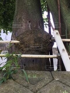 ツリーの前に木の棒の写真・画像素材[722956]
