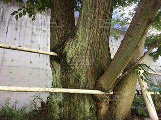 近くの木のアップ - No.722957