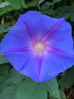 近くの花のアップの写真・画像素材[722970]