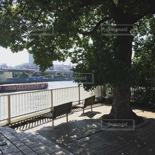 公園のベンチの写真・画像素材[1780539]