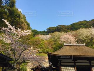 京都の春の山の写真・画像素材[1800512]