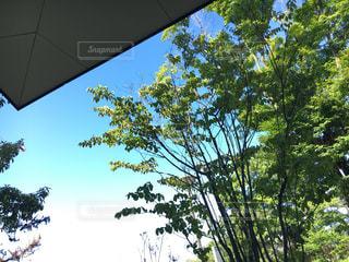 近くの木のアップの写真・画像素材[1785402]