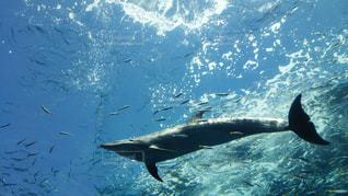 水面下を泳ぐ魚たちの写真・画像素材[1791009]