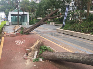台風通過後の街路樹の写真・画像素材[1782181]