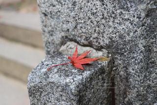 紅葉の葉の写真・画像素材[1786591]
