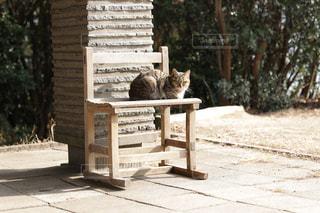 ベンチに座って猫の写真・画像素材[1801326]