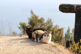 猫と海の写真・画像素材[1801343]