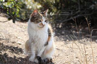 猫の写真・画像素材[1812307]