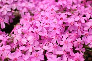 近くに紫の花のアップの写真・画像素材[1789421]