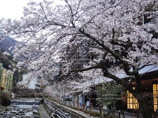 箱根湯本を散策の写真・画像素材[1869622]