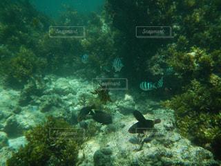 パプアニューギニアの海でシュノーケリングの写真・画像素材[2157453]