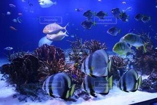 水族館の写真・画像素材[4941335]
