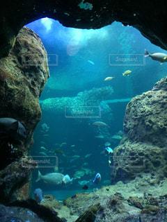 新江ノ島水族館の写真・画像素材[1784870]