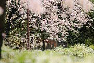 春爛漫の写真・画像素材[66507]