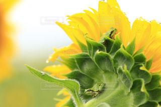 花の写真・画像素材[702019]