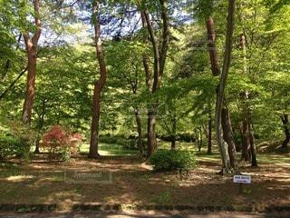 森林の写真・画像素材[68203]