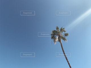 一本のヤシの木の写真・画像素材[2433047]