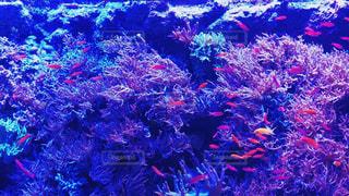 近くにサンゴ礁のアップの写真・画像素材[1786420]