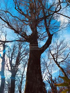 大樹の写真・画像素材[1787461]