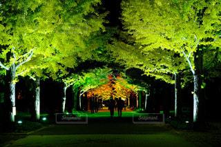あづま総合運動公園の銀杏並木の写真・画像素材[2828236]