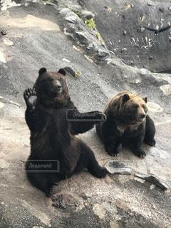 手を振っている黒い熊の写真・画像素材[1789982]