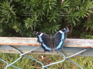 フェンスの上に座っている蝶々の写真・画像素材[1790034]