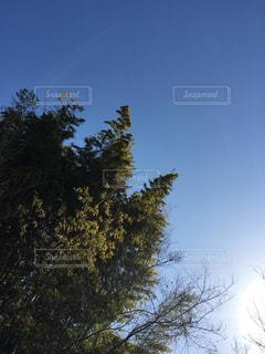 青空と木の写真・画像素材[1815998]